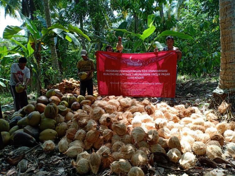 Saatnya Petani Kelapa Bersaing Di Pasar Global