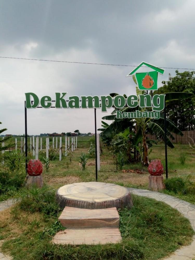 Ayo, Wisata Ke Perkebunan Buah Naga Di De Kampoeng Rembang Tau Dari Blogger - TDB